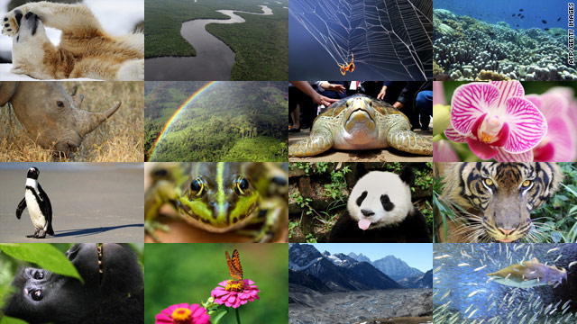 Just as biodiversity is crucial to ecological resilience, a diversity of ideas and solutions will be essential for overcoming socio-economic challenges and achieving sustainability.