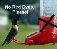hummingbird-nectar-no-red-dye