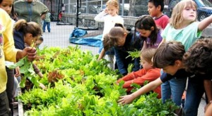 Teaching children how to grow fruits and vegetables allows them to connect with nature and feel a sense of pride in producing their own nutritious food.