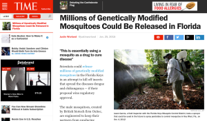 A recent article on the GM mosquitos in Time Magazine.