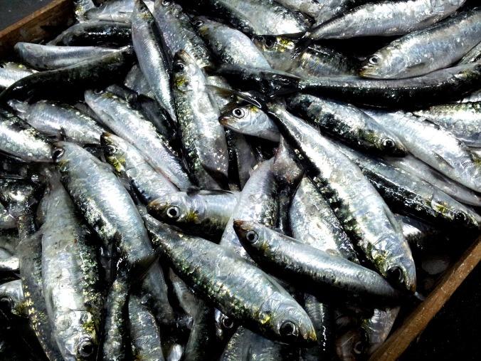 sardines-2289503_1920.jpg